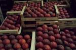 Peaches 4kg