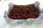 Cherries 5kg